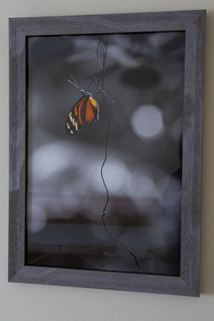 13x19 butterfly hanging