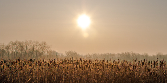 sunrise over cattails